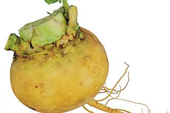 Post image for Nabaga Latvijas burkāns, biete un citi dārzeņi