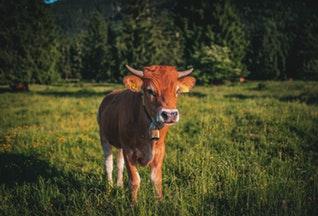 """Post image for Piena lopkopības uzņēmums """"Agro-Kaķenieki"""" attīstībā plāno ieguldīt miljonu eiro"""