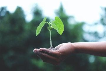 Post image for 2019.gadā sasniegts VARAM plānotais mērķis Zaļā publiskā iepirkuma piemērošanā obligātajās preču un pakalpojumu grupās