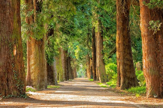 Post image for Piešķir papildu finansējumu Aldara parka atjaunošanai