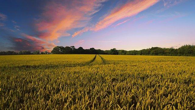 Post image for Zemkopības ministrija arī 2021. gadā īstenos nozīmīgus atbalsta pasākumus lauksaimniekiem